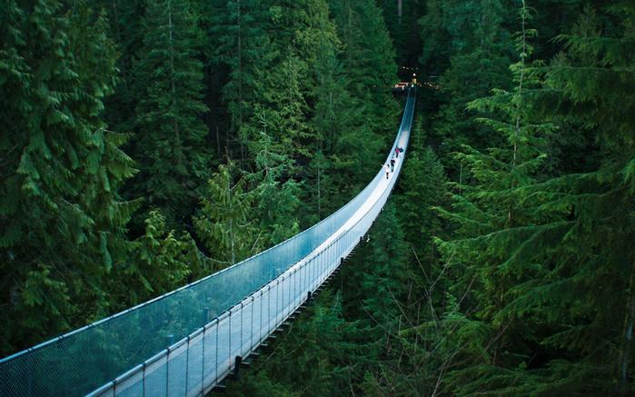 floresta-ponte (700x437, 430Kb)