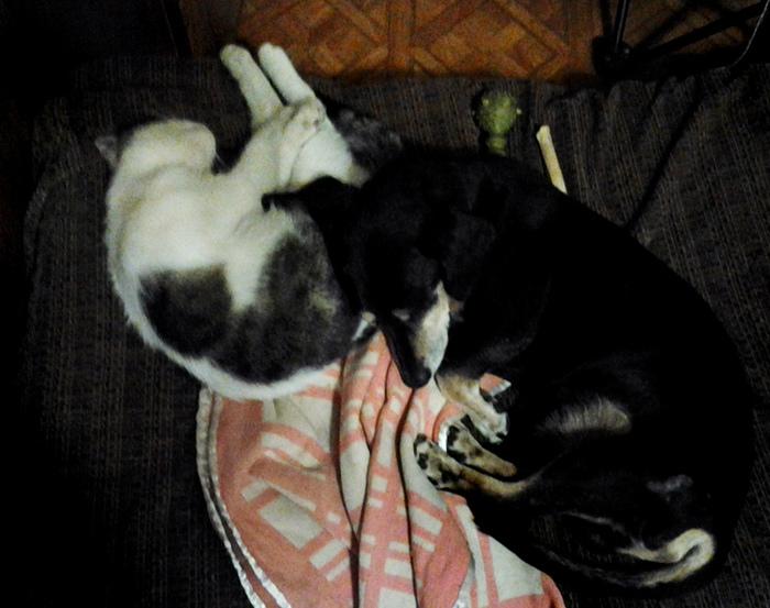 Как кощка с собакой/683232_solomom_i_izya_spyat (700x553, 167Kb)