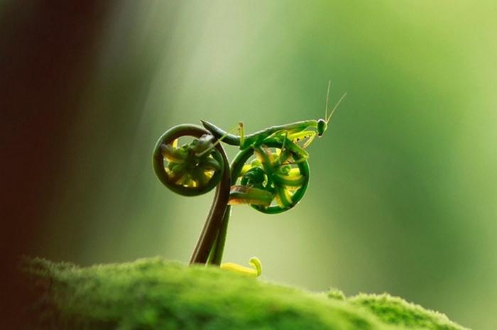 4. Богомол на велосипеде (700x465, 213Kb)