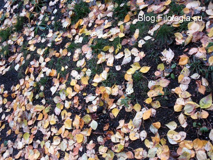 Земля, усыпанная листьями (700x525, 134Kb)