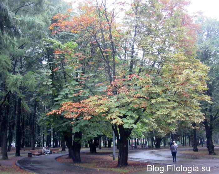 Деревья с желтеющей листвой в парке Дружба на Речном вокзале в Москве. Автобусная остановка Северный речной вокзал (700x558, 106Kb)