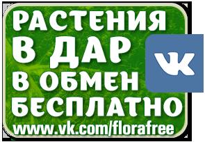 обмен растениями, florafree, растения в дар, растения бесплатно, халява, приму в дар, растения даром, цветы бесплатно, саженцы, халява на односклассниках, рассада бесплатно/3041158_GreenSeries_florafree_vk (295x204, 71Kb)