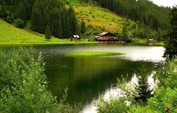 priroda-gory-derevya-reka-dom (596x380, 131Kb)