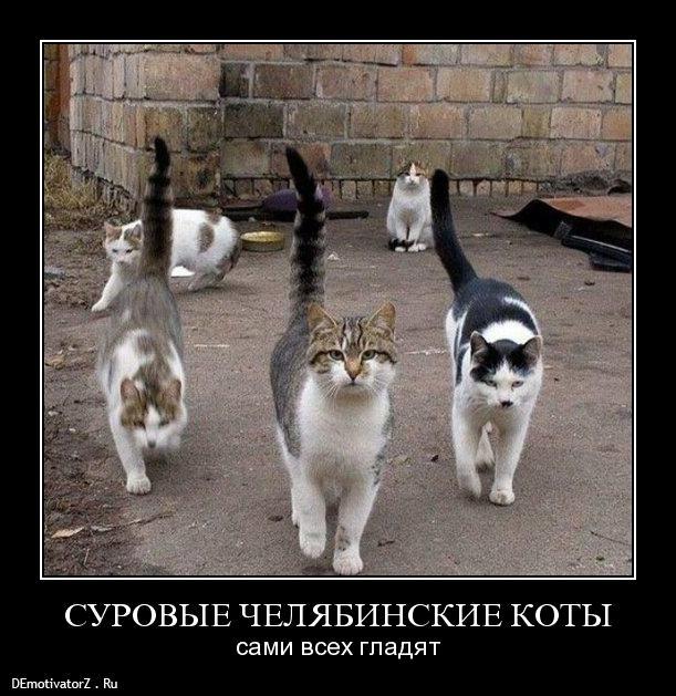 surovye-chelyabinskie-koty_40_demotivatorz.ru (611x629, 74Kb)