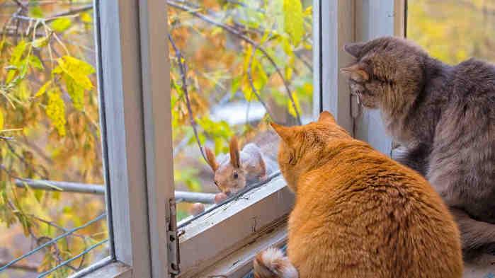кошки_осень_белка_окно_коты (700x393, 26Kb)