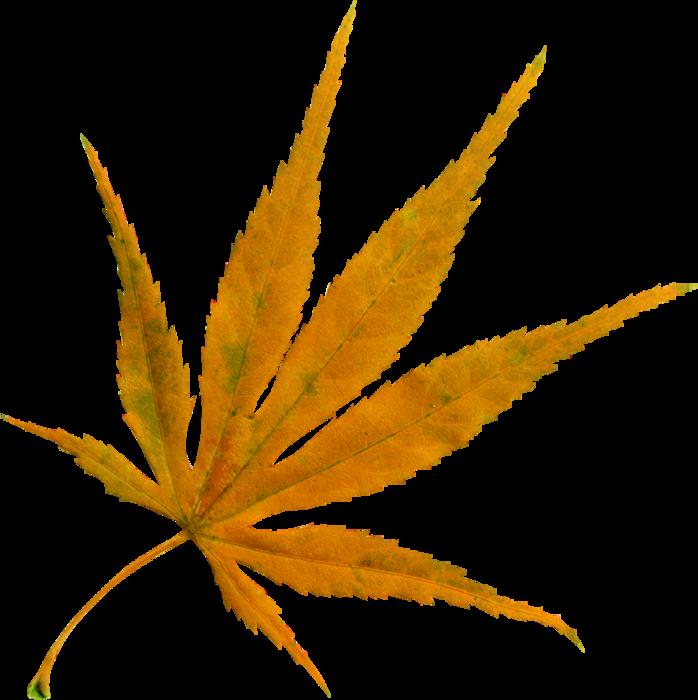 AutumnBreeze_MoleminaScrap_el (48) (698x700, 287Kb)