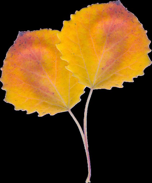 AutumnBreeze_MoleminaScrap_el (49) (580x700, 358Kb)