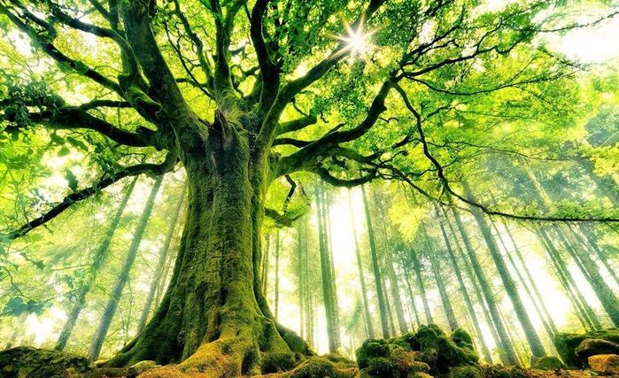 Завораживающие фото необычных деревьев (700x427, 491Kb)
