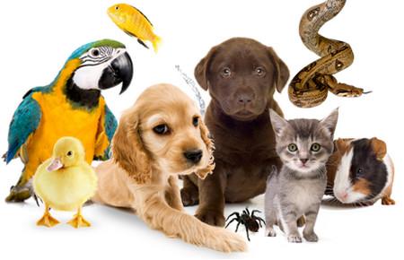 животные (450x290, 44Kb)