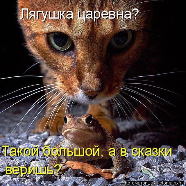 kotomatritsa_1a (640x640, 470Kb)