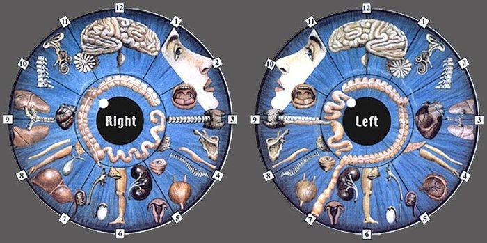 alt=Глаза-зеркало болезни/2835299_Iridodiagnostika__raspoznaem_bolezni_po_glazam (700x349, 75Kb)