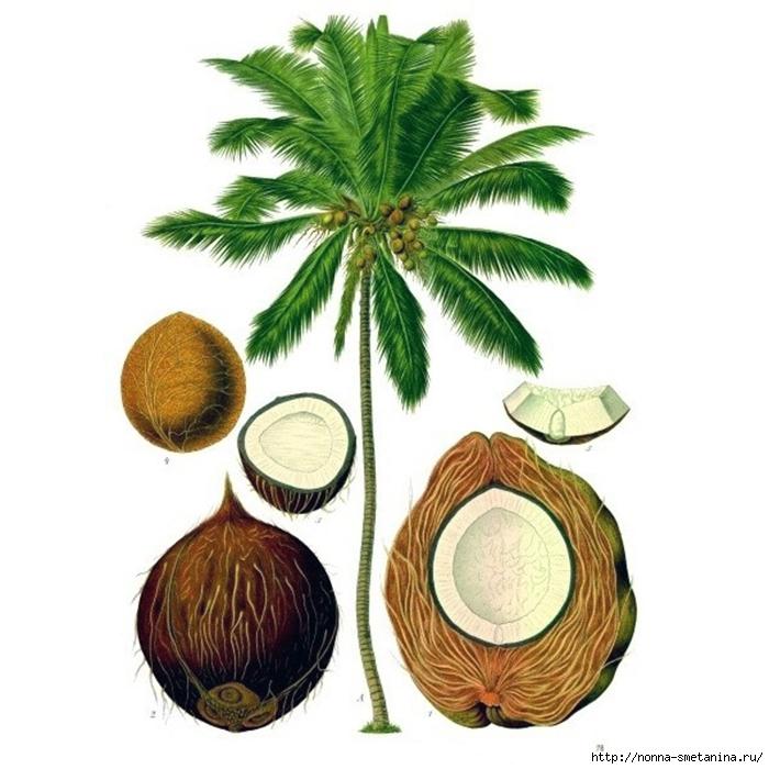 4487210_cocos_botanic (700x700, 238Kb)