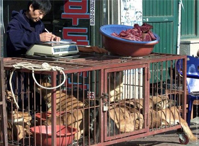 Собаки   не еда?