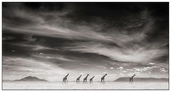 Африка. Жители саванны (фото)