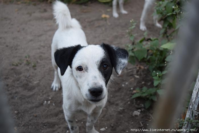 Ну очень любопытный пёс,фото на Nikon,снимки на Nikon D3300
