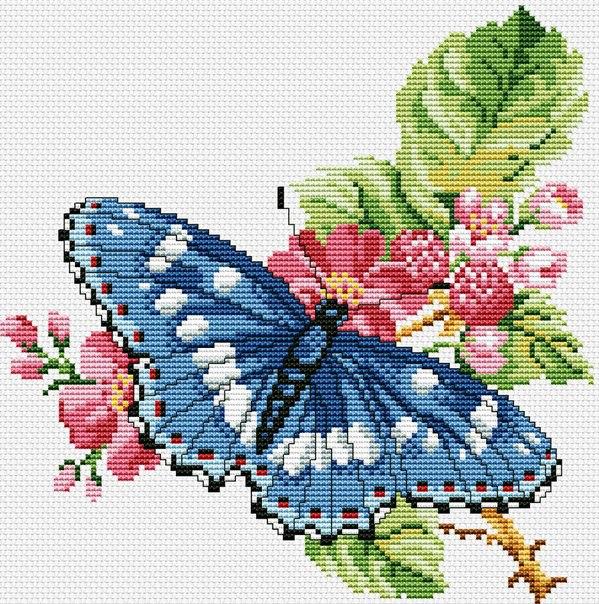 бабочка1 (599x604, 533Kb)