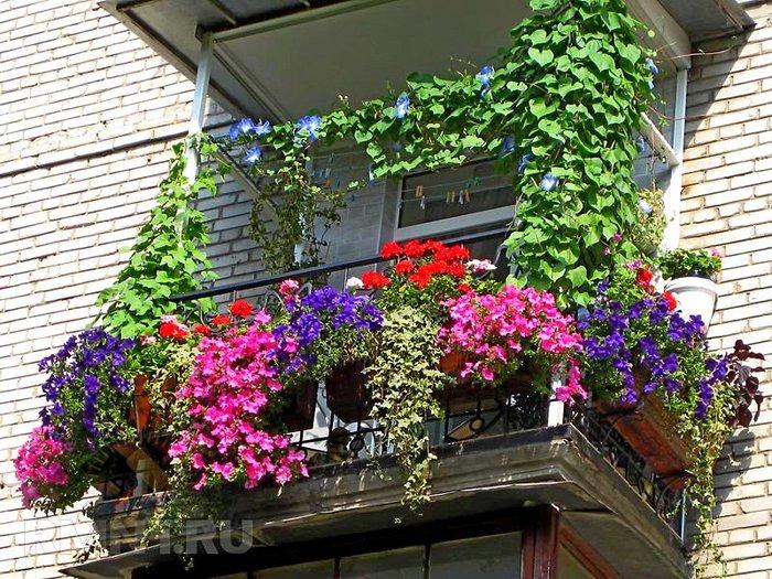 Клумбы своими руками на балконе - Русское золото