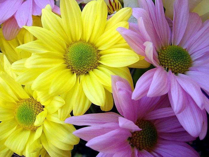 Пусть цветы стихи