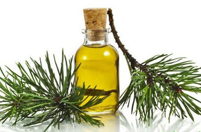 Как делают пихтовое масло в домашних условиях