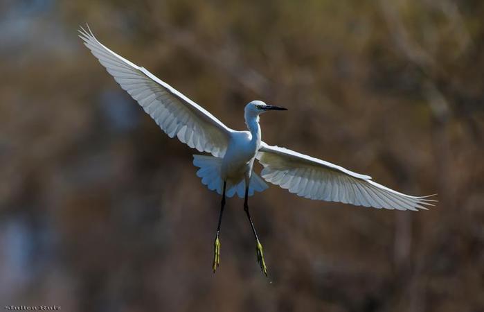 Красивые фотографии пользователей Flickr с природой, людьми и другими земными объектами