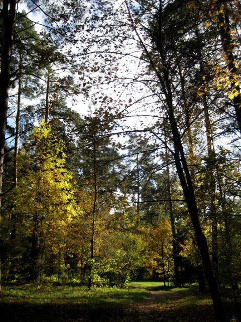 02 Моя песня - желанная осень (480x640, 204Kb)
