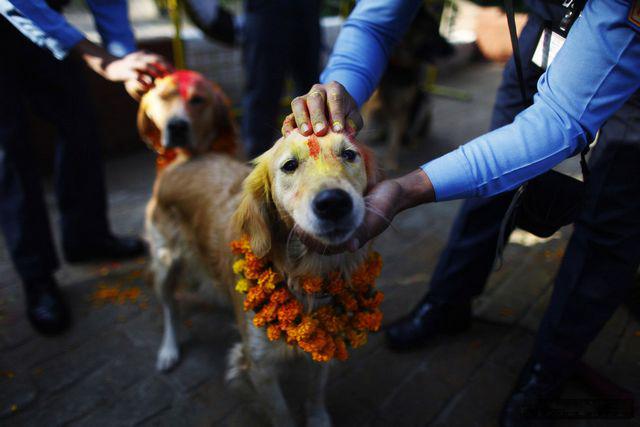 пёссио на празднике в Индии, 1 (640x427, 149Kb)