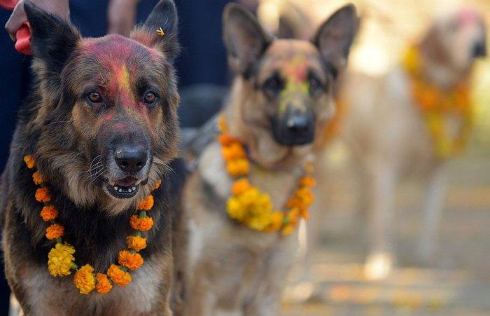 пёссио на празднике в Индии, 3 (700x451, 50Kb)