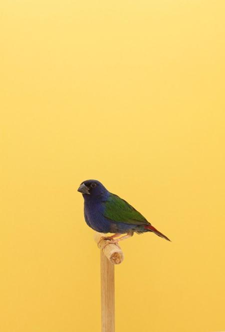 Фотографии птиц, которых коллекционируют англичане