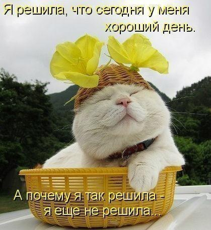 http://img0.liveinternet.ru/images/attach/c/7/94/216/94216108_x_5ca3e625.jpg