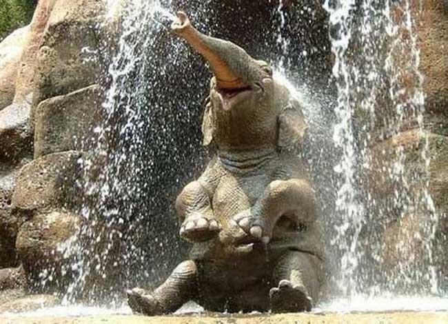 слонёнок (650x470, 68Kb)