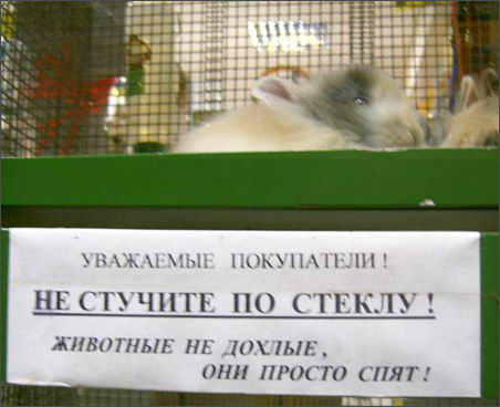 pets (452x368, 28Kb)