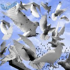 1353787282_images1jpg (225x225, 11Kb)