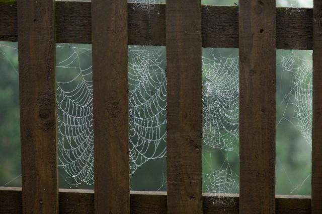 Деревянный забор (640x425, 82Kb)