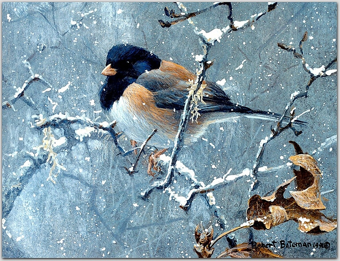 Birds_06_Junco%20in%20Winter,%201991_Robert%20Bateman_sqs (700x537, 416Kb)