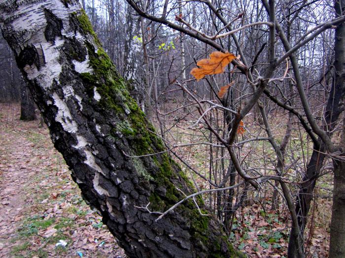 04 Чернотроп листик (700x525, 215Kb)