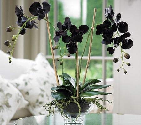 черная орхидея 2 (450x400, 68Kb)