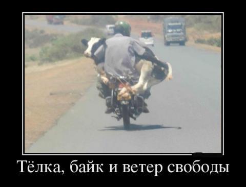 8775607_tyolka-bajk-i-veter-svobodyi (480x366, 17Kb)