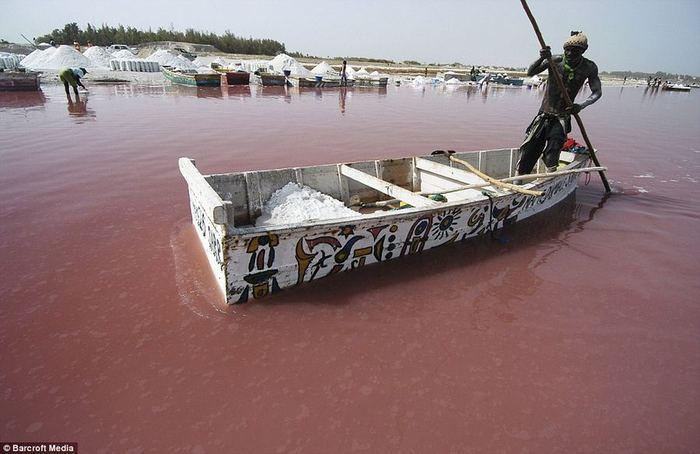 розовое озеро ретба в сенегале  (700x454, 48Kb)