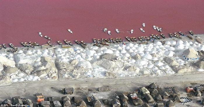 розовое озеро ретба в сенегале 4 (700x368, 58Kb)
