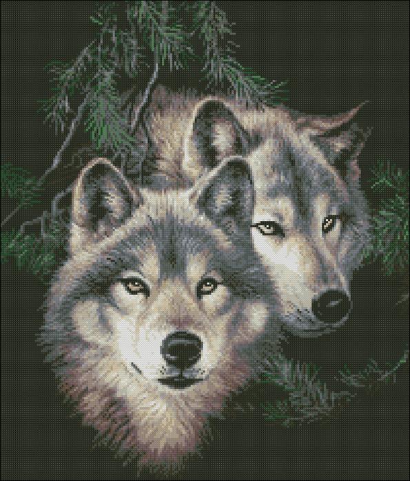 Волк с волчицей на черном фоне
