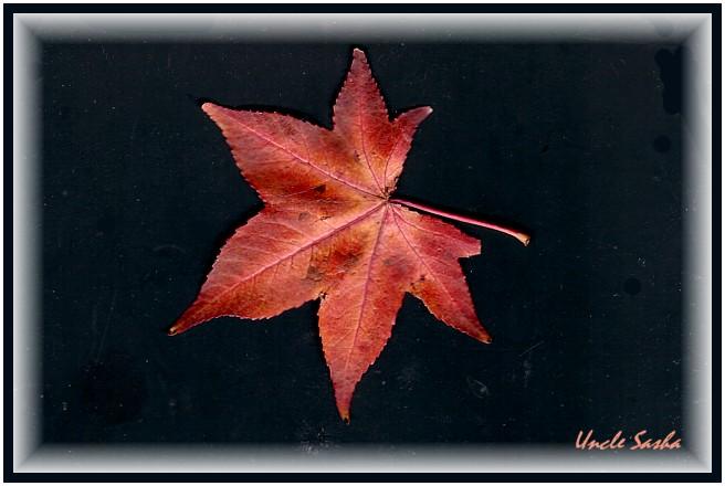 Untitled-Scanned-01 (656x440, 64Kb)