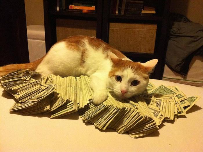 котэ-деньги-46243 (700x523, 118Kb)
