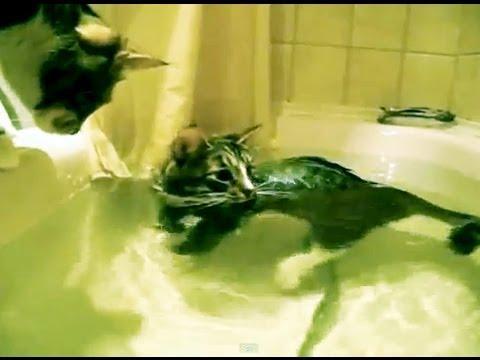 Кот плавает в ванной