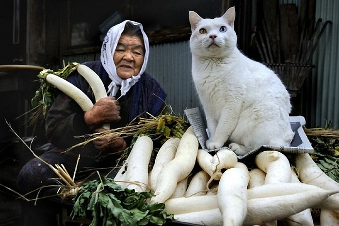 бабушка и кошка 18 (700x466, 226Kb)