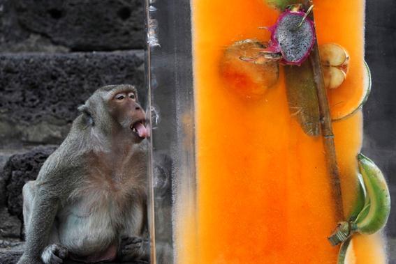 Обезьяний фестиваль и фуршет в Таиланде Фотографии