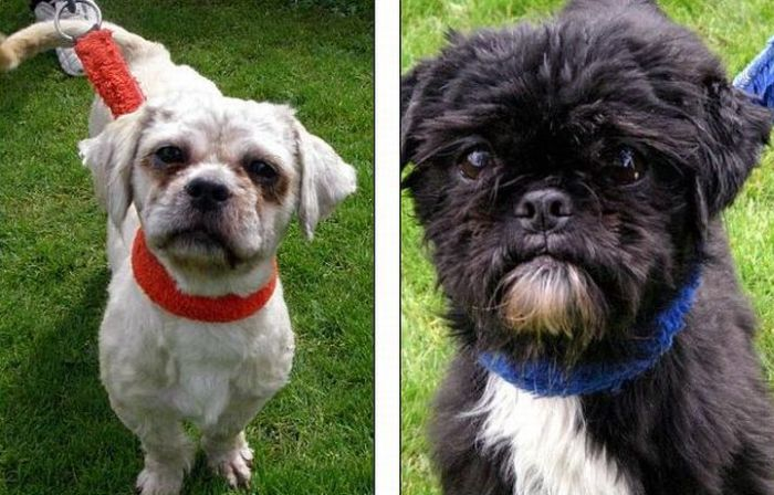 dogs_040 (700x448, 69Kb)