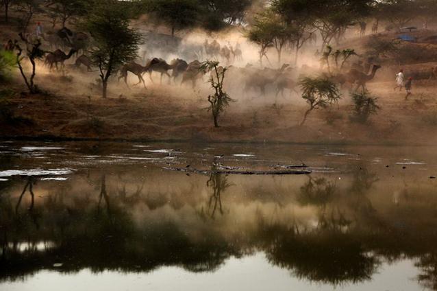 Ярмарка верблюдов в Пушкаре (Индия) Фотографии