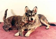 Собака, которая получила звание «Кошка года»