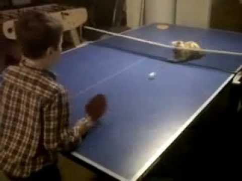 пинг понг кот/3518263_Ping_pong_cat (480x360, 12Kb)