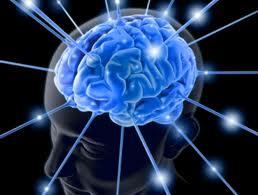 мозг (258x195, 8Kb)